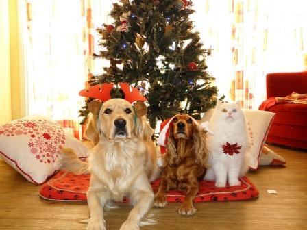 Tiere Weihnachtsbaum